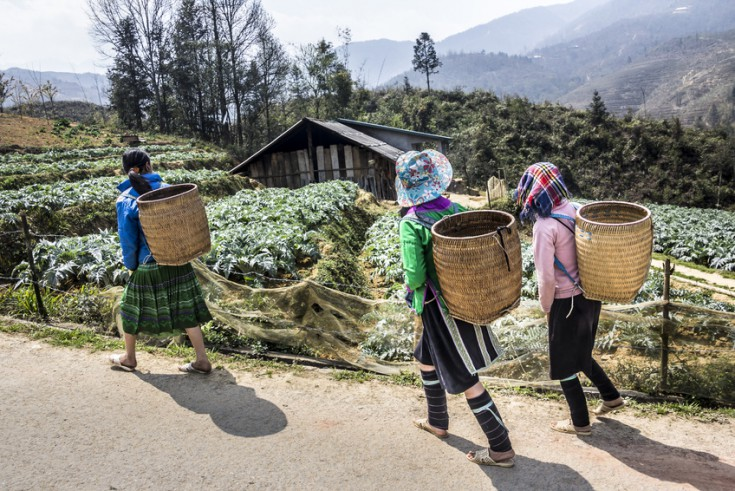 Three Beautiful Tribal Women Are Walking Along A Road Outside Sa Pa, Vietnam. They Carry The Typical Basket. In The Background Is A Tribal House.
